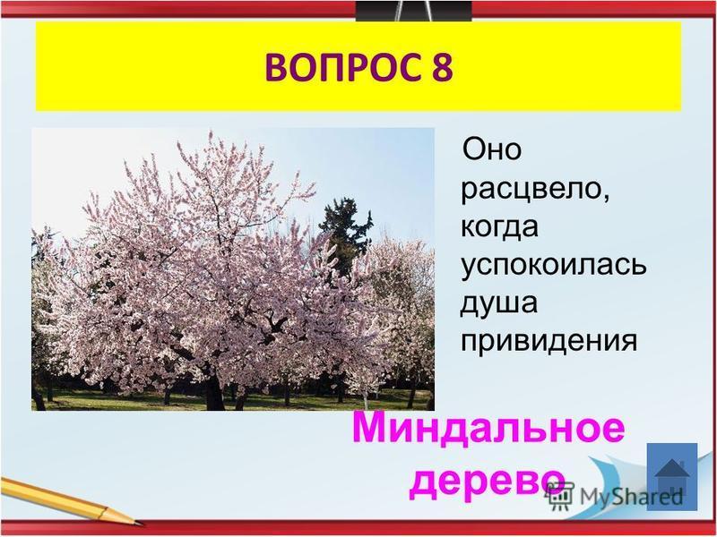 ВОПРОС 8 Оно расцвело, когда успокоилась душа привидения Миндальное дерево