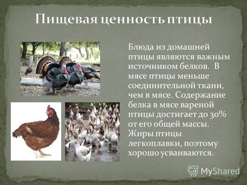 Блюда из домашней птицы являются важным источником белков. В мясе птицы меньше соединительной ткани, чем в мясе. Содержание белка в мясе вареной птицы достигает до 30% от его общей массы. Жиры птицы легкоплавки, поэтому хорошо усваиваются.