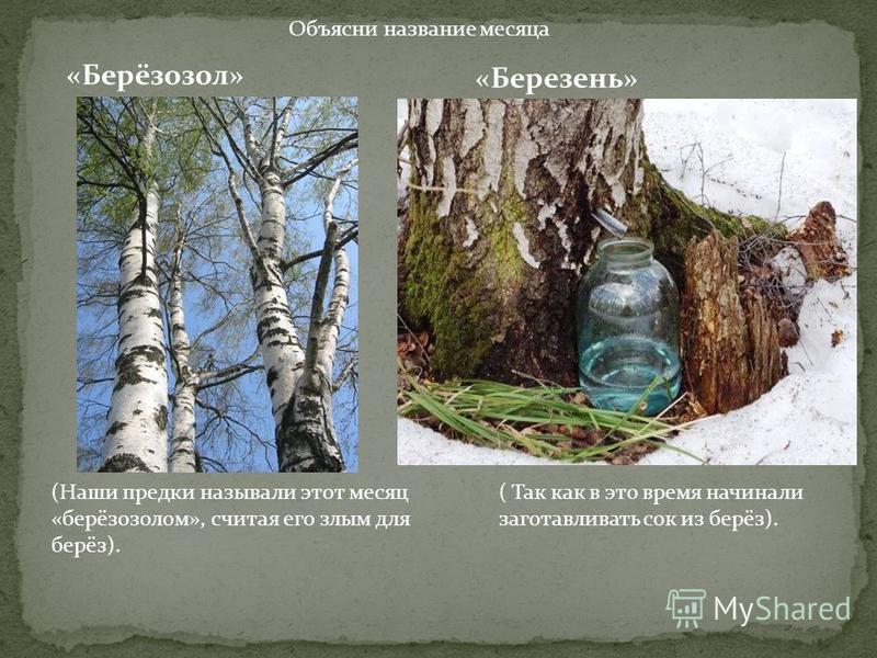Объясни название месяца «Берёзозол» «Березень» (Наши предки называли этот месяц «берёзозолом», считая его злым для берёз). ( Так как в это время начинали заготавливать сок из берёз).