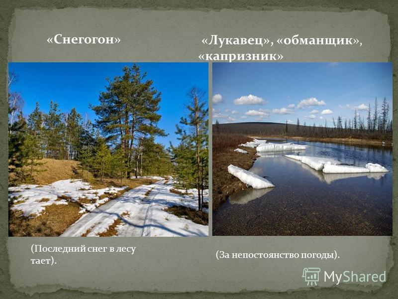 «Снегогон» «Лукавец», «обманщик», «капризник» (Последний снег в лесу тает). (За непостоянство погоды).