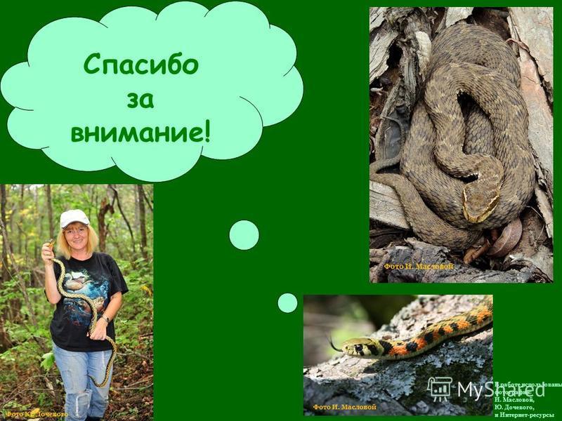 Спасибо за внимание! В работе использованы фотографии: И. Масловой, Ю. Дочевого, и Интернет-ресурсы Фото И. Масловой Фото Ю. Дочевого