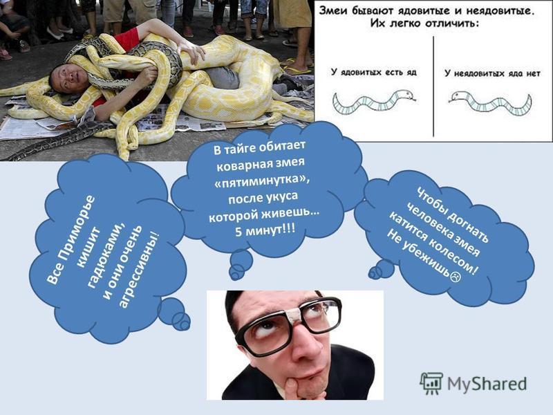 В тайге обитает коварная змея «пятиминутка», после укуса которой живешь… 5 минут!!! Все Приморье кишит гадюками, и они очень агрессивны ! Чтобы догнать человека змея катится колесом! Не убежишь