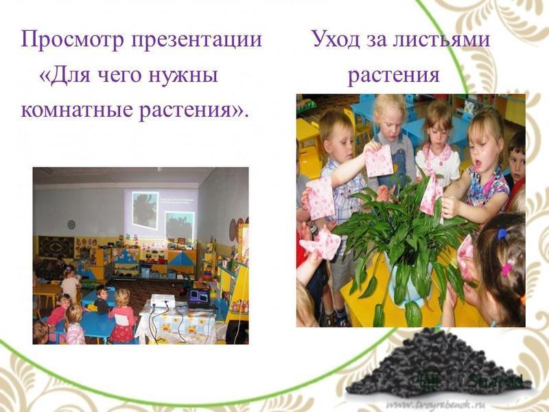 Просмотр презентации Уход за листьями «Для чего нужны растения комнатные растения».