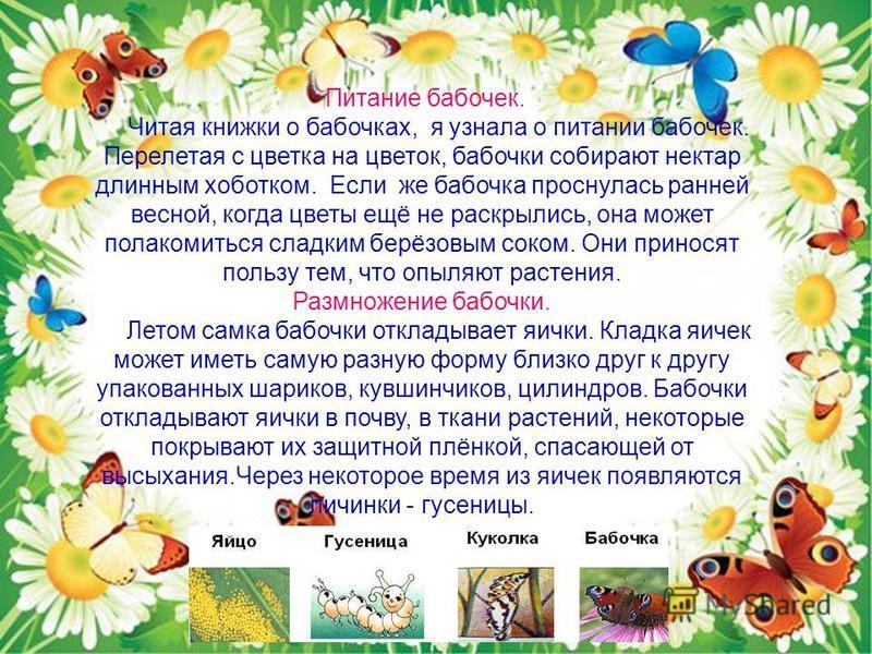 Питание бабочек. Читая книжки о бабочках, я узнала о питании бабочек. Перелетая с цветка на цветок, бабочки собирают нектар длинным хоботком. Если же бабочка проснулась ранней весной, когда цветы ещё не раскрылись, она может полакомиться сладким берё