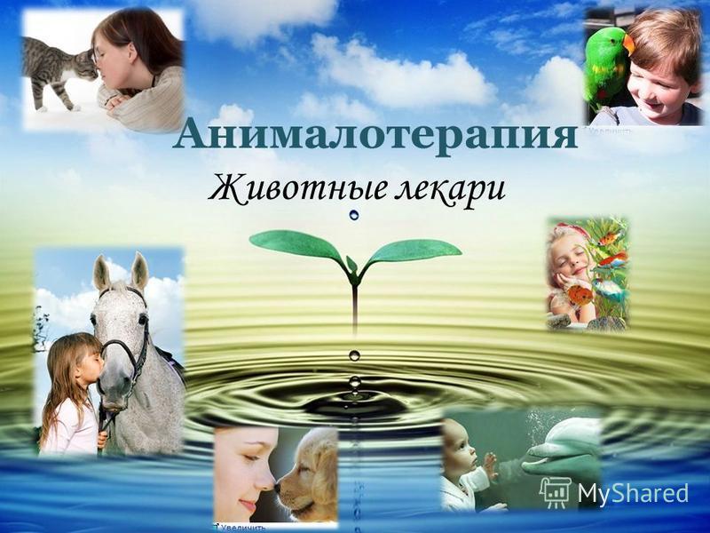Анималотерапия Животные лекари