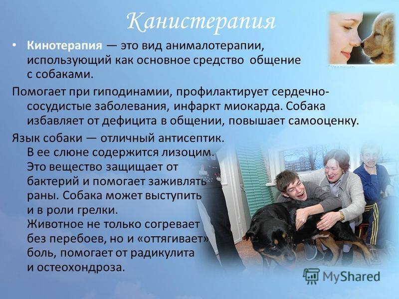 Канистерапия Кинотерапия это вид анималотерапии, использующий как основное средство общение с собаками. Помогает при гиподинамии, профилактирует сердечно- сосудистые заболевания, инфаркт миокарда. Собака избавляет от дефицита в общении, повышает само
