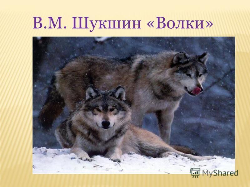 В.М. Шукшин «Волки»