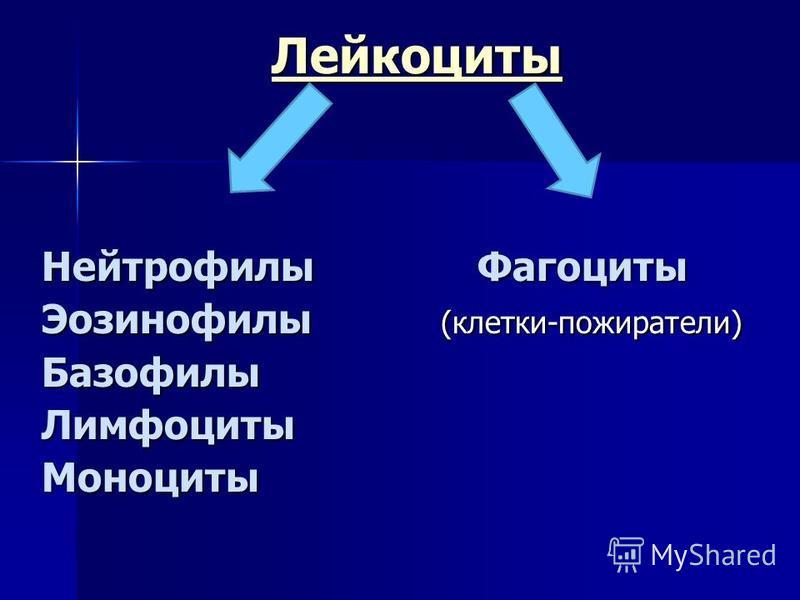 Лейкоциты Нейтрофилы Фагоциты Эозинофилы (клетки-пожиратели) Базофилы ЛимфоцитыМоноциты