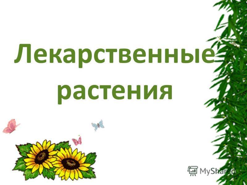 Заголовок Лекарственные растения
