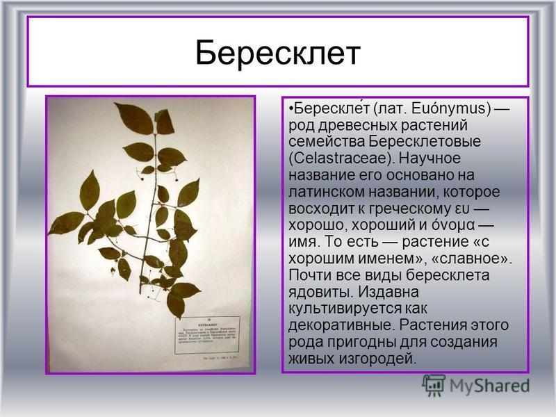 Бересклет Берескле́т (лат. Euónymus) род древесных растении семейства Бересклетовые (Celastraceae). Научное название его основано на латинском названии, которое восходит к греческому ευ хорошо, хороший и όνομα имя. То есть растение «с хорошим именем»