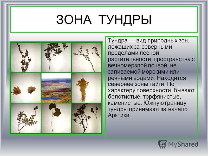 ЗОНА ТУНДРЫ Ту́недра вид природных изон, лежащих за северными пределами лесной растительности, пространства с вечномёрзлой почвой, не заливаемой морскими или речными водами. Находится севернее изоны тайги. По характеру поверхности бывают болотистые,