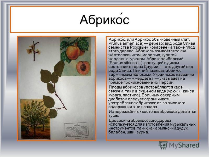 Абрико́с Абрико́с, или Абрикос обыкновенный (лат. Prúnus armeniáca) дерево; вид рода Слива семейства Роизовые (Rosaceae), а также плод этого дерева. Абрикос называется также жёлтосливником, морелью, курагой, жерделью, урюком. Абрикос сибирский (Prunu