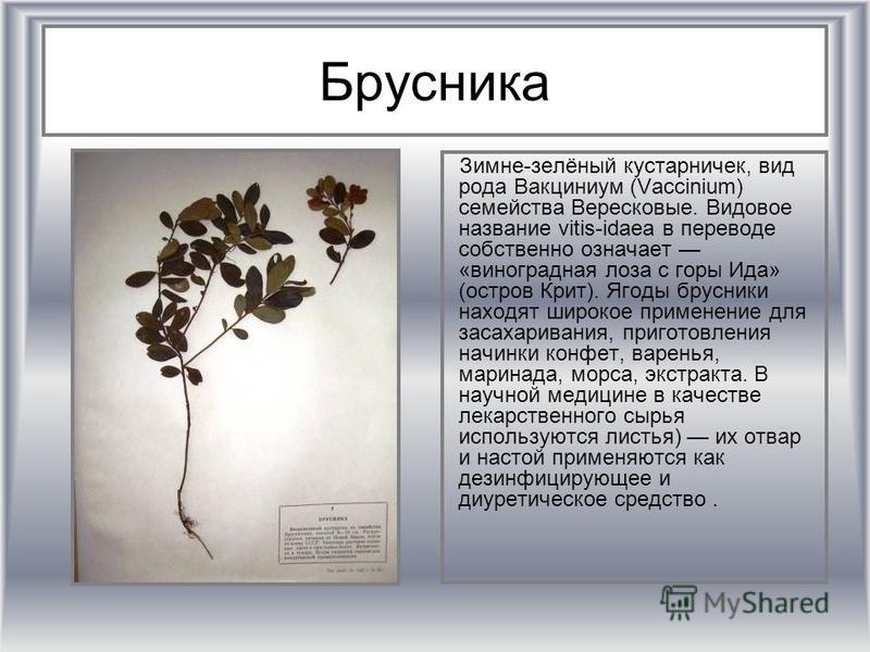 Брусника Зимне-зелёный кустарничек, вид рода Вакциниум (Vaccinium) семейства Вересковые. Видовое название vitis-idaea в переводе собственно означает «виноградная лоза с горы Ида» (остров Крит). Ягоды брусники находят широкое применение для засахарива
