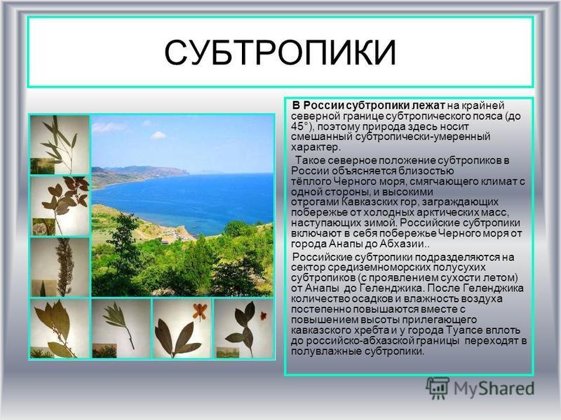 СУБТРОПИКИ В России субтропики лежат на крайней северной границе субтропического пояса (до 45°), поэтому природа здесь носит смешанный субтропически-умеренный характер. Такое северное положение субтропиков в России объясняется блиизостью тёплого Черн