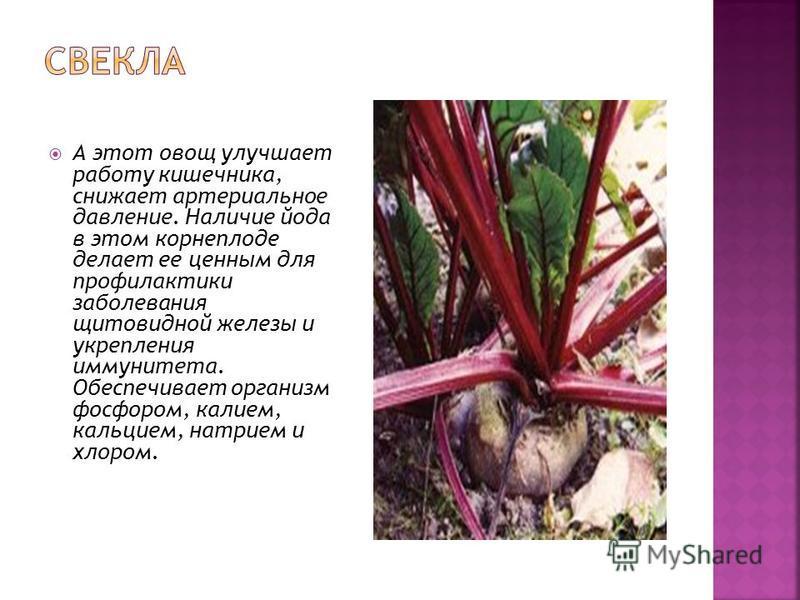 А этот овощ улучшает работу кишечника, снижает артериальное давление. Наличие йода в этом корнеплоде делает ее ценным для профилактики заболевания щитовидной железы и укрепления иммунитета. Обеспечивает организм фосфором, калием, кальцием, натрием и