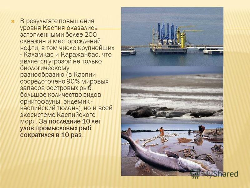 В результате повышения уровня Каспия оказались затопленными более 200 скважин и месторождений нефти, в том числе крупнейших - Каламкас и Каражанбас, что является угрозой не только биологическому разнообразию (в Каспии сосредоточено 90% мировых запасо