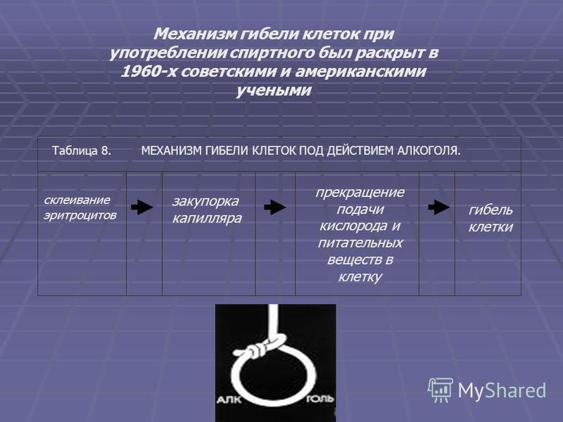 Механизм гибели клеток при употреблении спиртного был раскрыт в 1960-х советскими и американскими учеными Таблица 8. МЕХАНИЗМ ГИБЕЛИ КЛЕТОК ПОД ДЕЙСТВИЕМ АЛКОГОЛЯ. склеивание эритроцитов закупорка капилляра прекращпение подачи кислорода и питательных