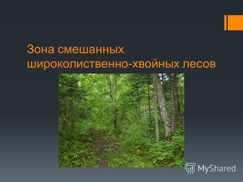 Зона смешанных широколиственно-хвойных лесов
