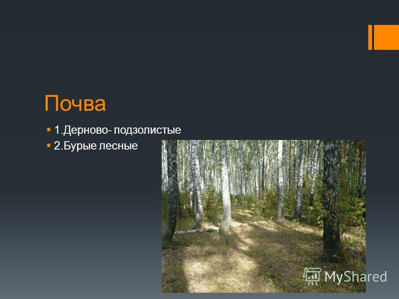 Почва 1.Дерново- подзолистые 2. Бурые лесные
