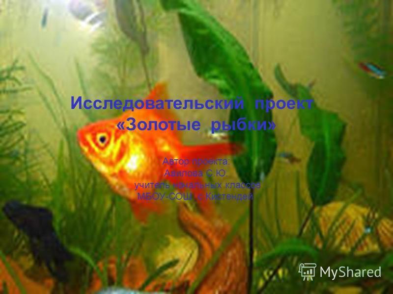 Исследовательский проект «Золотые рыбки» Автор проекта: Авилова С.Ю. учитель начальных классов МБОУ-СОШ с.Кистендей