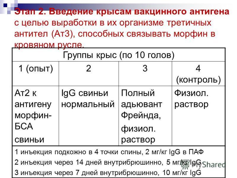 Этап 2. Введение крысам вакцинного антигена с целью выработки в их организме третичных антител (Ат 3), способных связывать морфин в кровяном русле. Группы крыс (по 10 голов) 1 (опыт)234 (контроль) Ат 2 к антигену морфин- БСА свиньи IgG свиньи нормаль