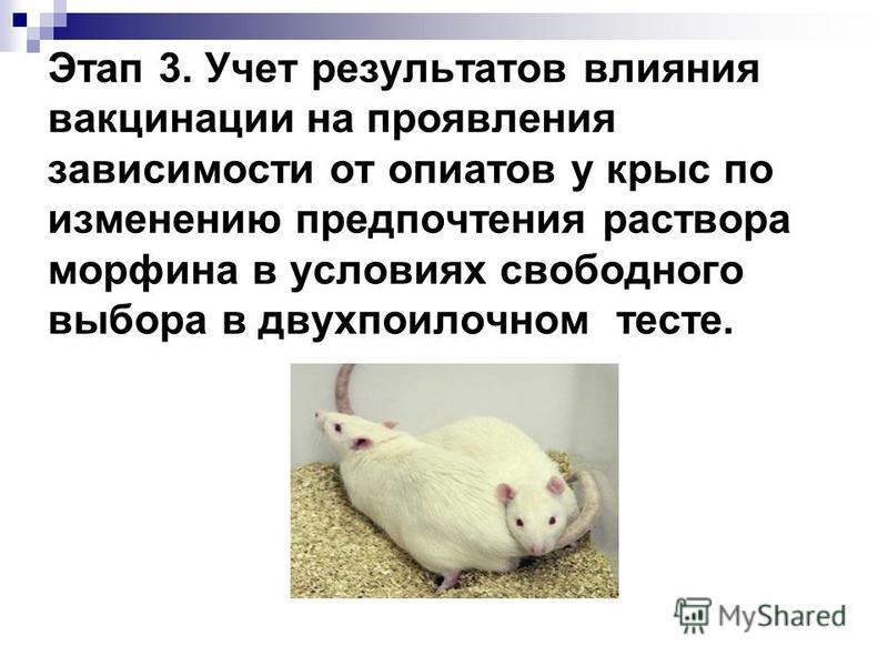 Этап 3. Учет результатов влияния вакцинации на проявления зависимости от опиатов у крыс по изменению предпочтения раствора морфина в условиях свободного выбора в двухпоилочном тесте.