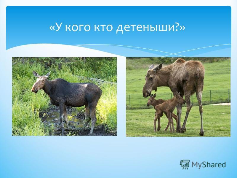 «У кого кто детеныши?»