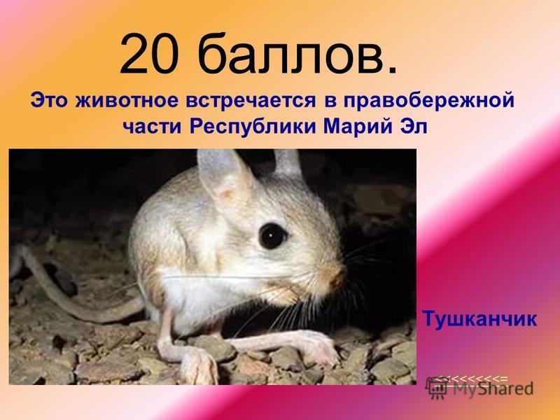 20 баллов. <<<<<<<<= Это животное встречается в правобережной части Республики Марий Эл Тушканчик