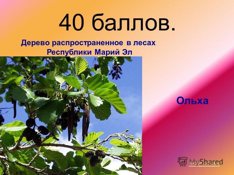 40 баллов. <<<<<<<<= Дерево распространенное в лесах Республики Марий Эл Ольха