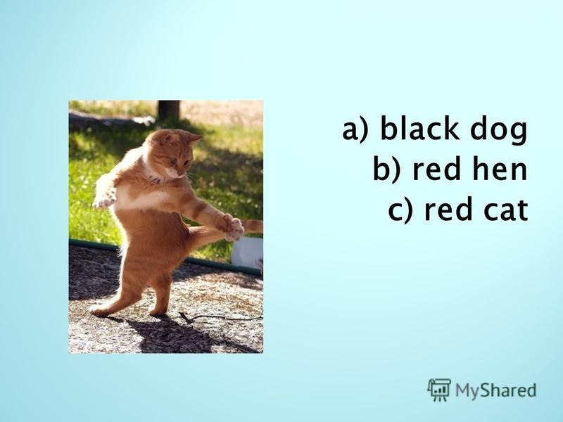 a) black dog b) red hen c) red cat