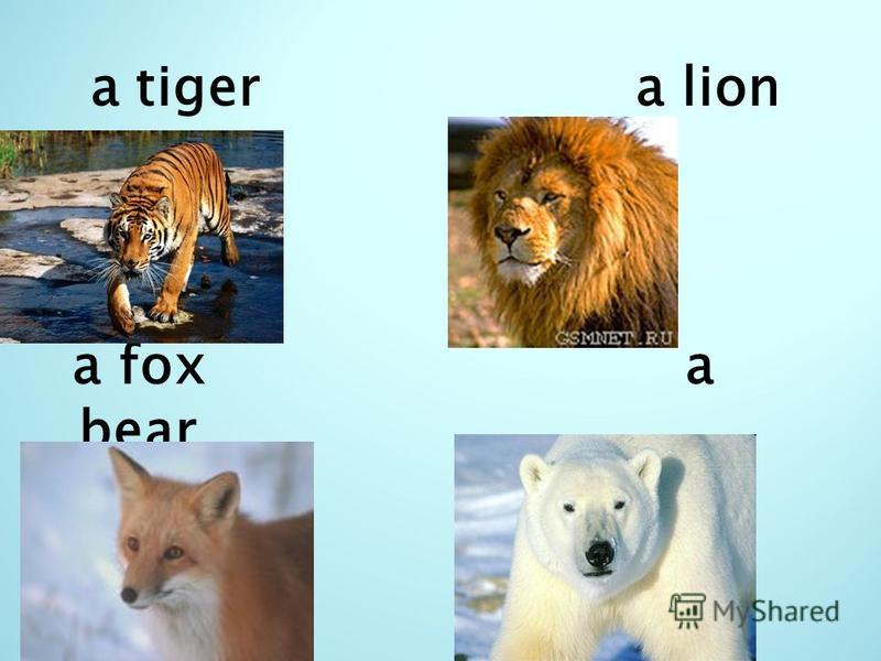 a tiger a lion a fox a bear