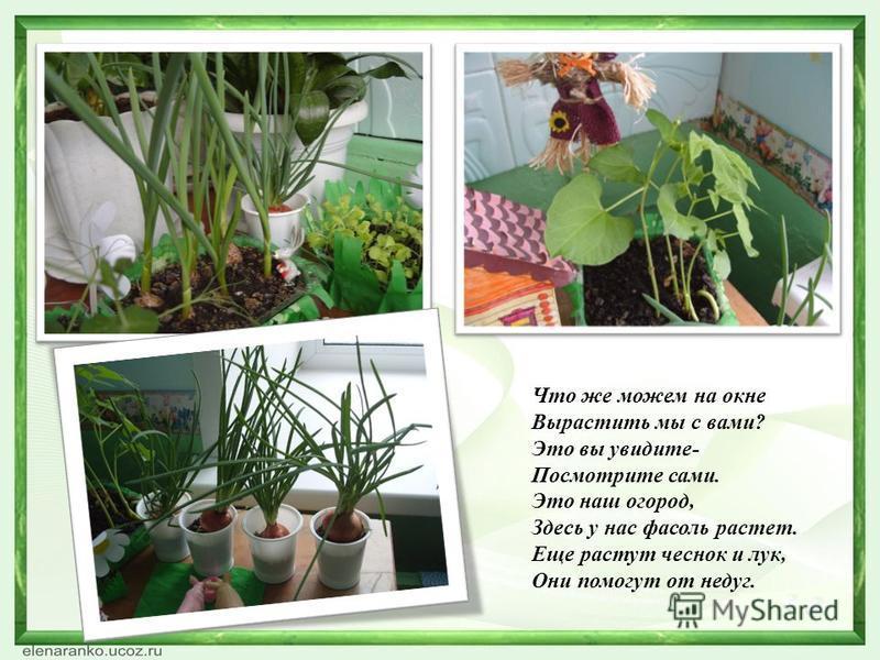 Что же можем на окне Вырастить мы с вами? Это вы увидите- Посмотрите сами. Это наш огород, Здесь у нас фасоль растет. Еще растут чеснок и лук, Они помогут от недуг.