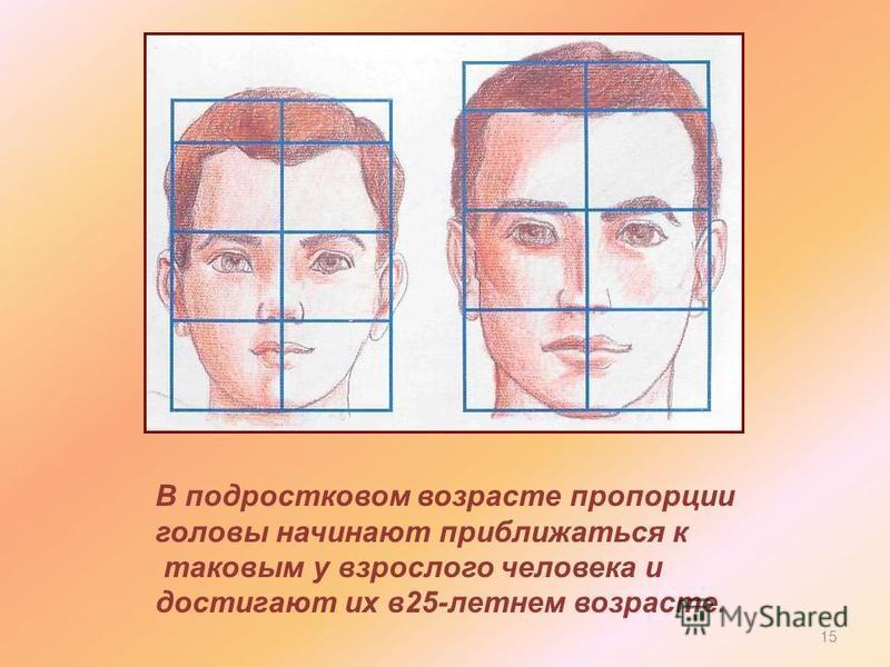 В подростковом возрасте пропорции головы начинают приближаться к таковым у взрослого человека и достигают их в 25-летнем возрасте. 15
