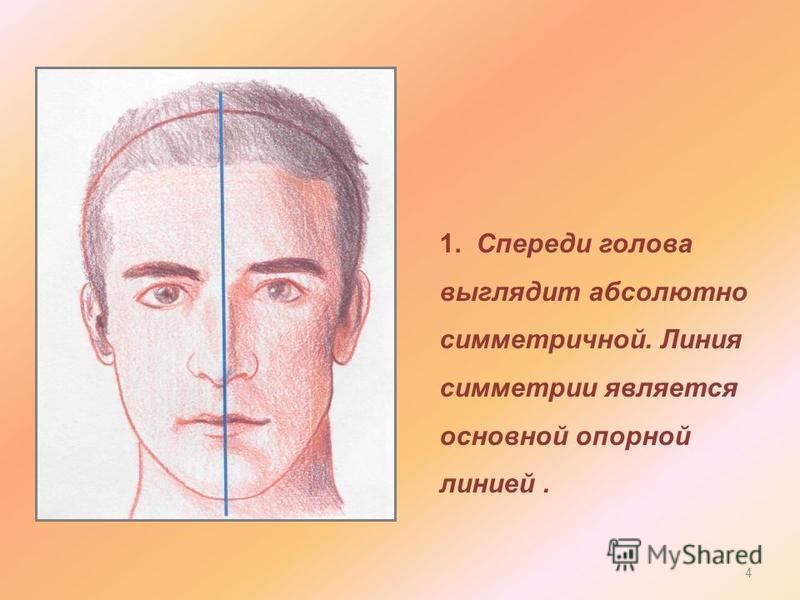 1. Спереди голова выглядит абсолютно симметричной. Линия симметрии является основной опорной линией. 4