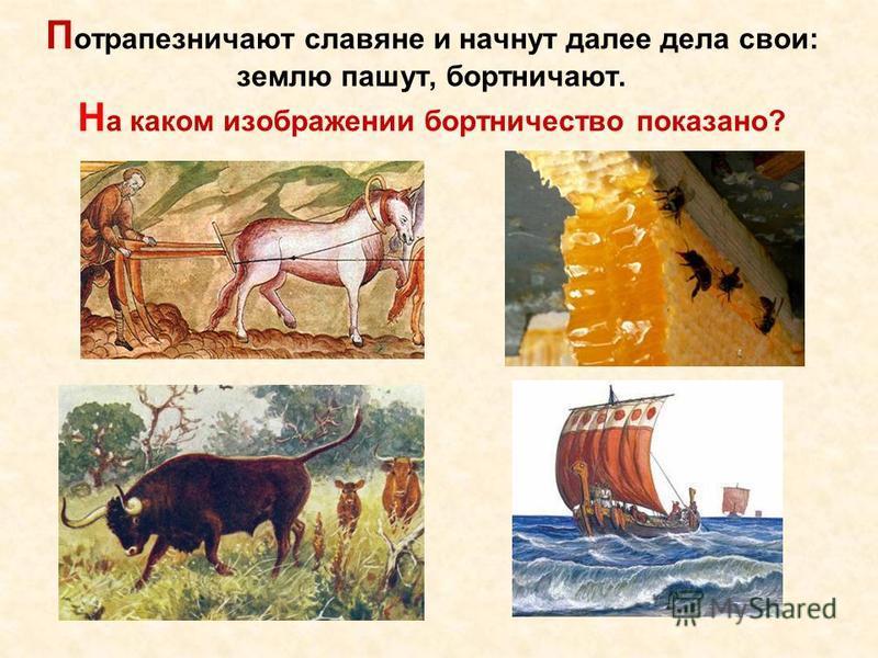 П сотрапезничают славяне и начнут далее дела свои: землю пашут, бортничают. Н а каком изображении бортничество показано?