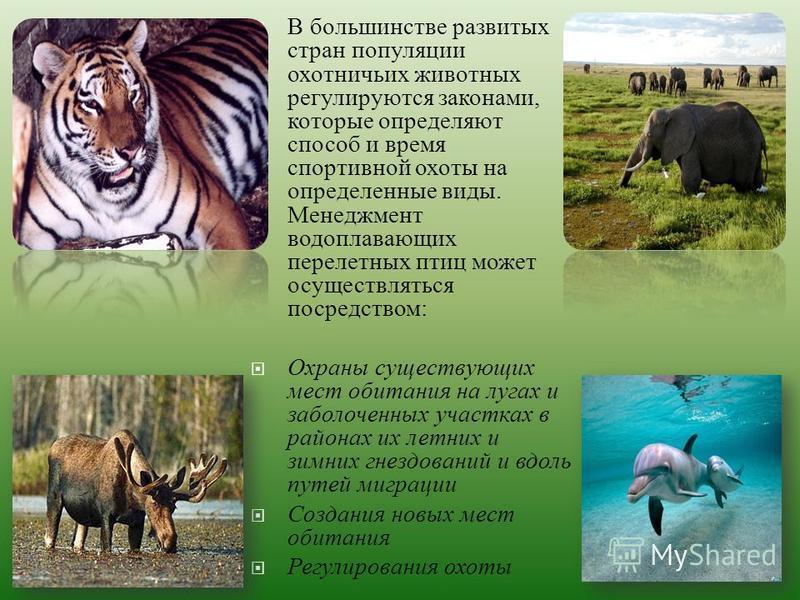 В большинстве развитых стран популяции охотничьих животных регулируются законами, которые определяют способ и время спортивной охоты на определенные виды. Менеджмент водоплавающих перелетных птиц может осуществляться посредством : Охраны существующих
