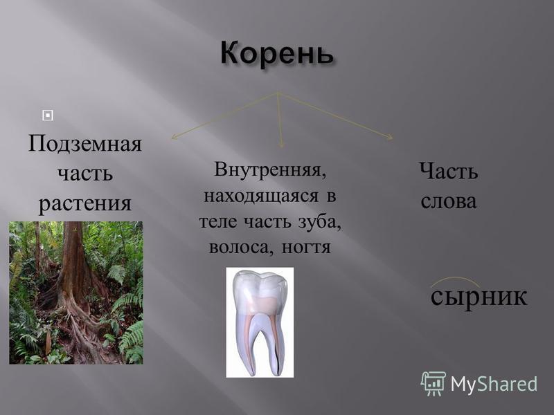 Подземная часть растения Внутренняя, находящаяся в теле часть зуба, волоса, ногтя Часть слова сырник