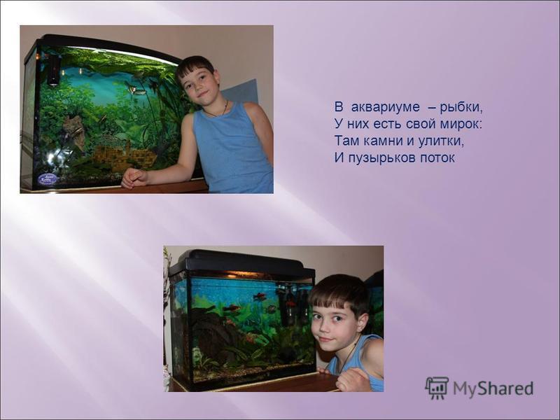 В аквариуме – рыбки, У них есть свой мирок: Там камни и улитки, И пузырьков поток