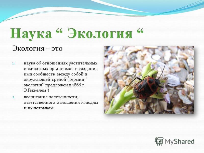 Экология – это 1. наука об отношениях растительных и животных организмов и создания ими сообществ между собой и окружающей средой (термин