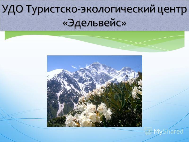 УДО Туристско-экологический центр «Эдельвейс»