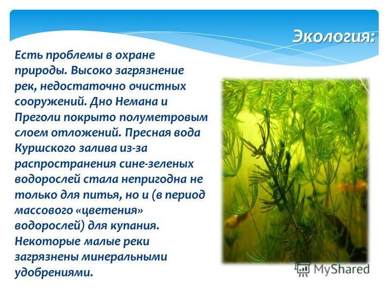 Есть проблемы в охране природы. Высоко загрязнение рек, недостаточно очистных сооружений. Дно Немана и Преголи покрыто полуметровым слоем отложений. Пресная вода Куршского залива из-за распространения сине-зеленых водорослей стала непригодна не тольк