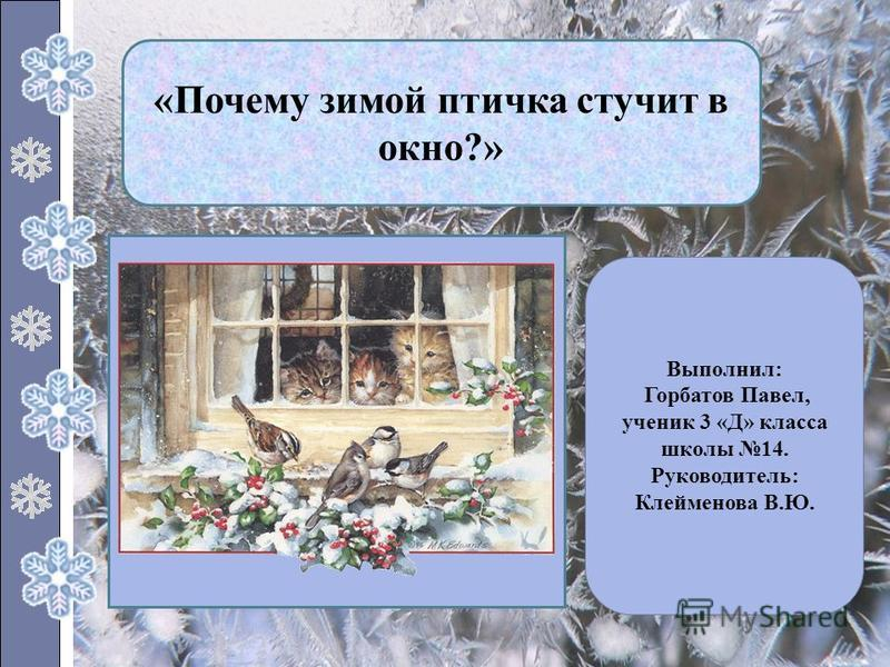 «Почему зимой птичка стучит в окно?» Выполнил: Горбатов Павел, ученик 3 «Д» класса школы 14. Руководитель: Клейменова В.Ю.