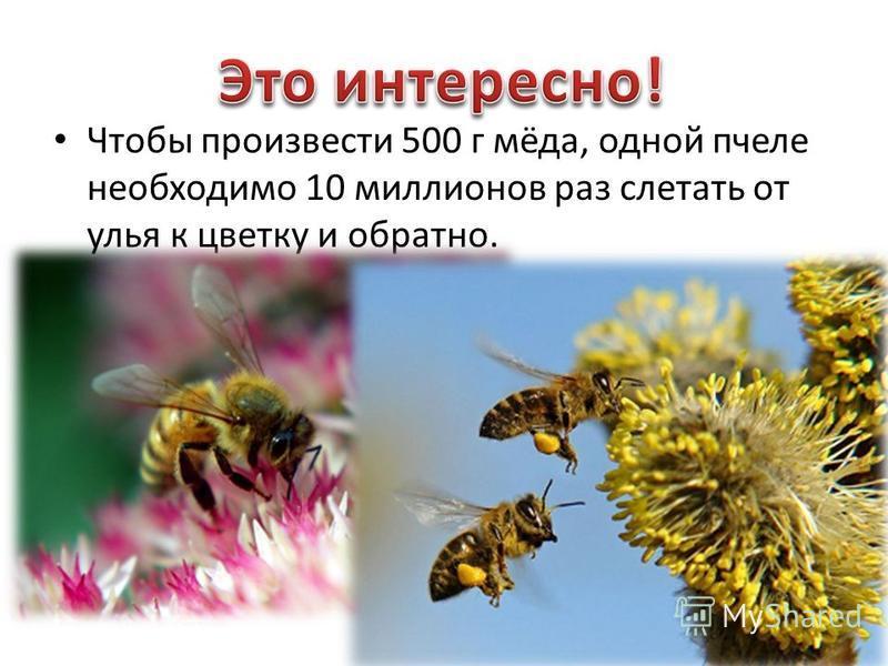 Чтобы произвести 500 г мёда, одной пчеле необходимо 10 миллионов раз слетать от улья к цветку и обратно.
