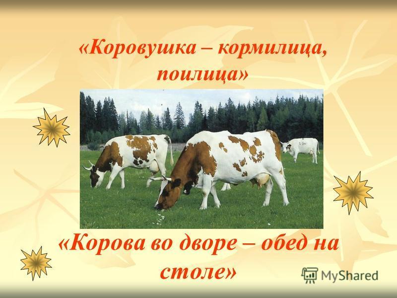 «Коровушка – кормилица, поилица» «Корова во дворе – обед на столе»