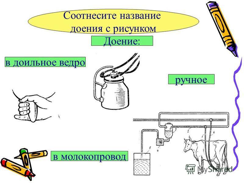 Соотнесите название доения с рисунком Доение: ручное в молокопровод в доильное ведро