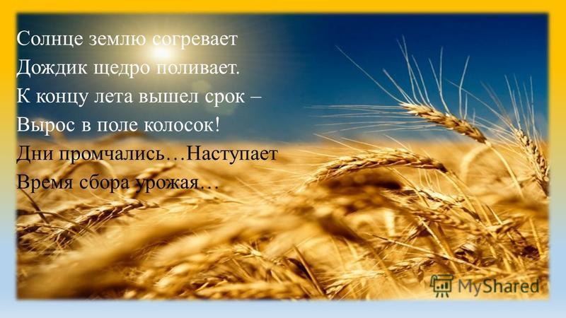 Солнце землю согревает Дождик щедро поливает. К концу лета вышел срок – Вырос в поле колосок! Дни промчались…Наступает Время сбора урожая…