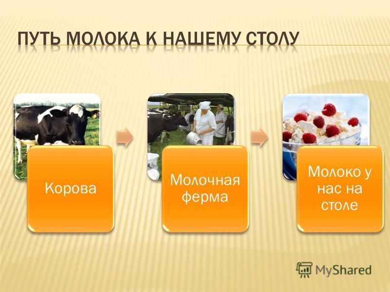 Корова Молочная ферма Молоко у нас на столе