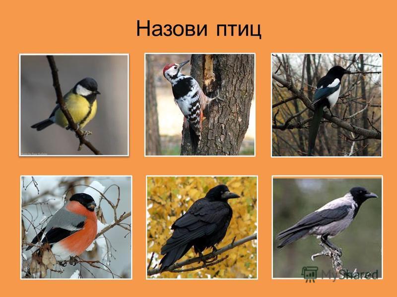 Назови птиц