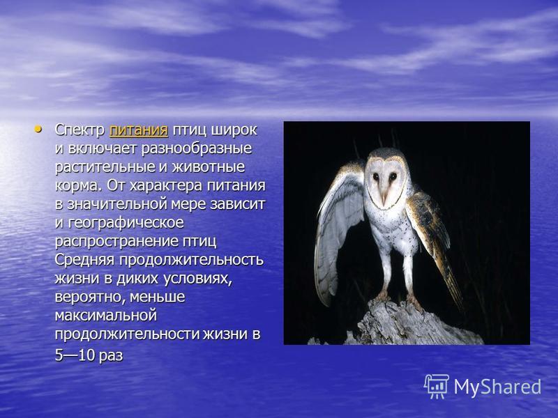 Спектр питания птиц широк и включает разнообразные растительные и животные корма. От характера питания в значительной мере зависит и географическое распространение птиц Средняя продолжительность жизни в диких условиях, вероятно, меньше максимальной п