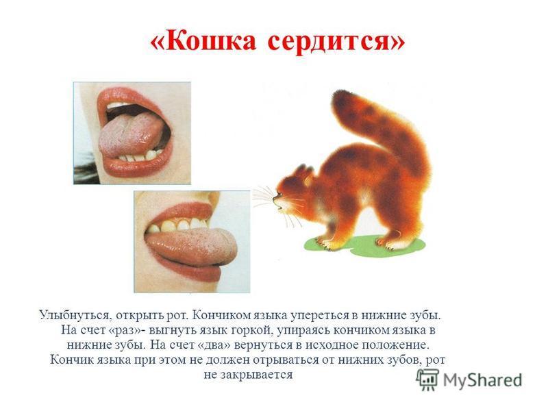 «Кошка сердится» Улыбнуться, открыть рот. Кончиком языка упереться в нижние зубы. На счет «раз»- выгнуть язык горкой, упираясь кончиком языка в нижние зубы. На счет «два» вернуться в исходное положение. Кончик языка при этом не должен отрываться от н